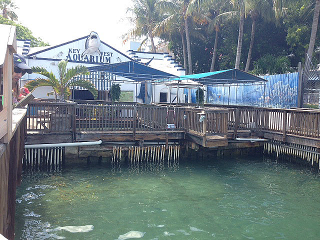 Key West Aquarium Shark Tank