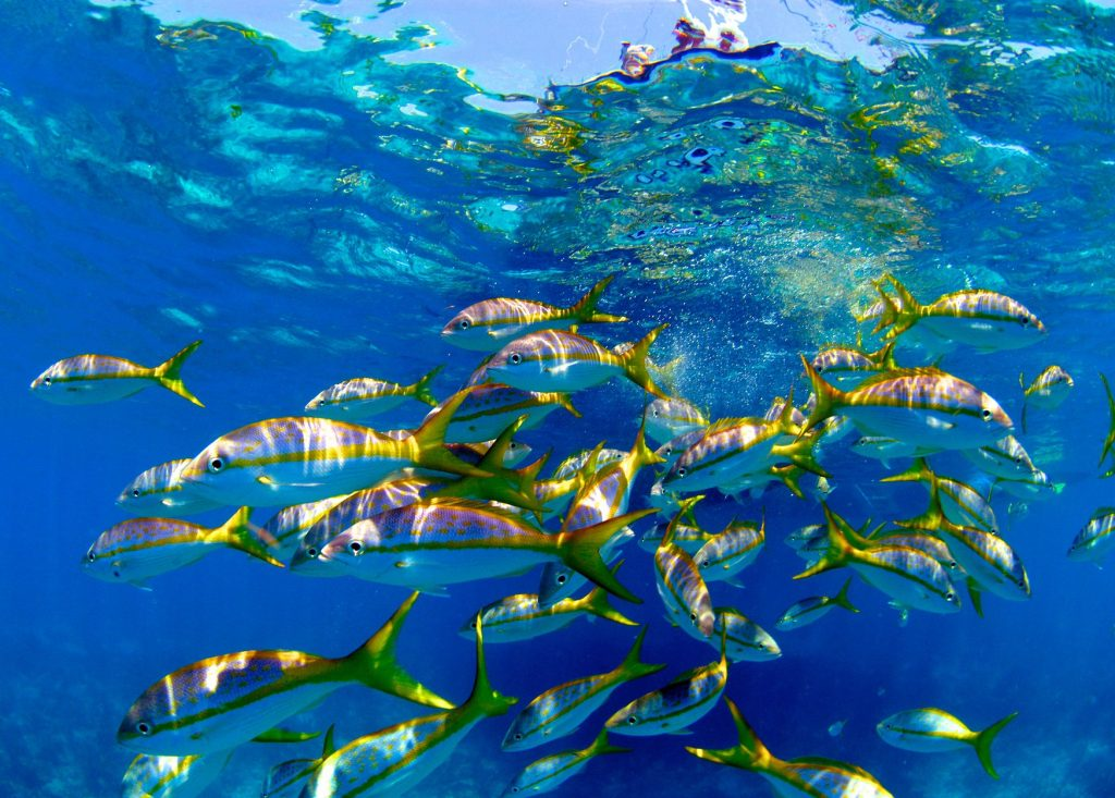 Coral reef school of fish
