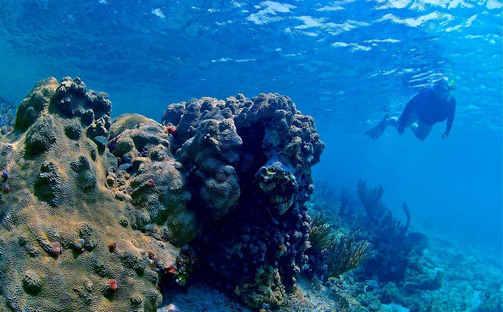Coral Reef Key West Diving